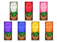 All Hyacinth Plant