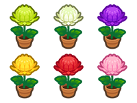 All Mum Plant