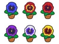 All Pansy Plant