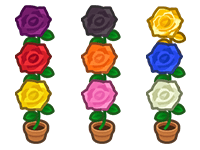 All Rose Plant
