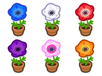All Windflower Plant