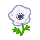 white windflowers(10)