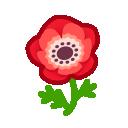 red windflowers(10)