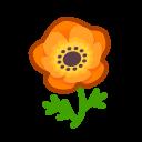 orange windflowers(10)