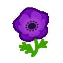 purple windflowers(10)