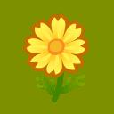 yellow cosmos(10)