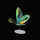 grand Q. A. birdwing model