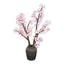 cherry-blossom branches