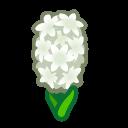white hyacinths(10)