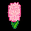 pink hyacinths(10)