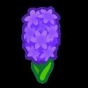 purple hyacinths(10)