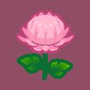 pink mums(10)
