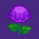 purple mums(10)
