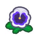 white pansies(10)