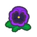 purple pansies(10)