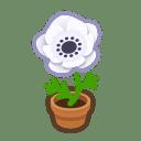 white-windflower plant