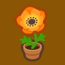 orange-windflower plant