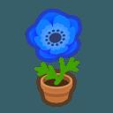 blue-windflower plant