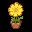 yellow-cosmos plant