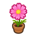 pink-cosmos plant