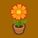 orange-cosmos plant