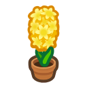 yellow-hyacinth plant