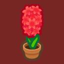 red-hyacinth plant
