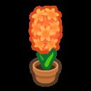 orange-hyacinth plant