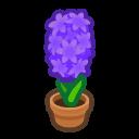 purple-hyacinth plant
