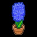 blue-hyacinth plant