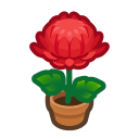 red-mum plant