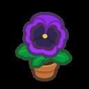 purple-pansy plant