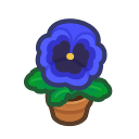 blue-pansy plant