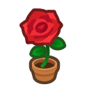 red-rose plant