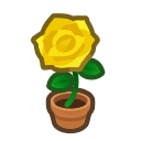 yellow-rose plant