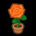 orange-rose plant