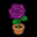 purple-rose plant
