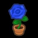 blue-rose plant