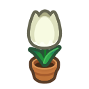 white-tulip plant