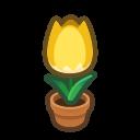 yellow-tulip plant