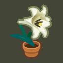 white-lily plant