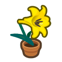 yellow-lily plant