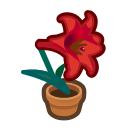 red-lily plant