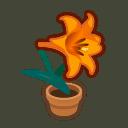 orange-lily plant