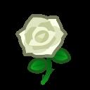 white roses(10)