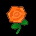 orange roses(10)