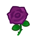 purple roses(10)