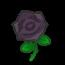 black roses(10)