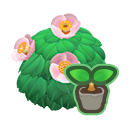 pink-camellia start(10)