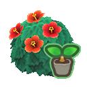 red-hibiscus start(10)